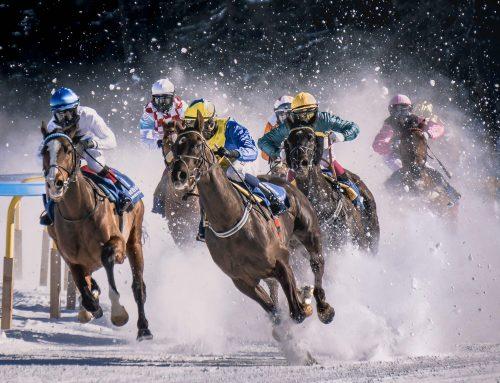 Saddles for life